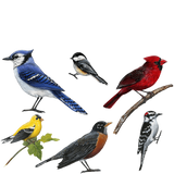 Song Birds Combo Pack Wall Decals Stickers