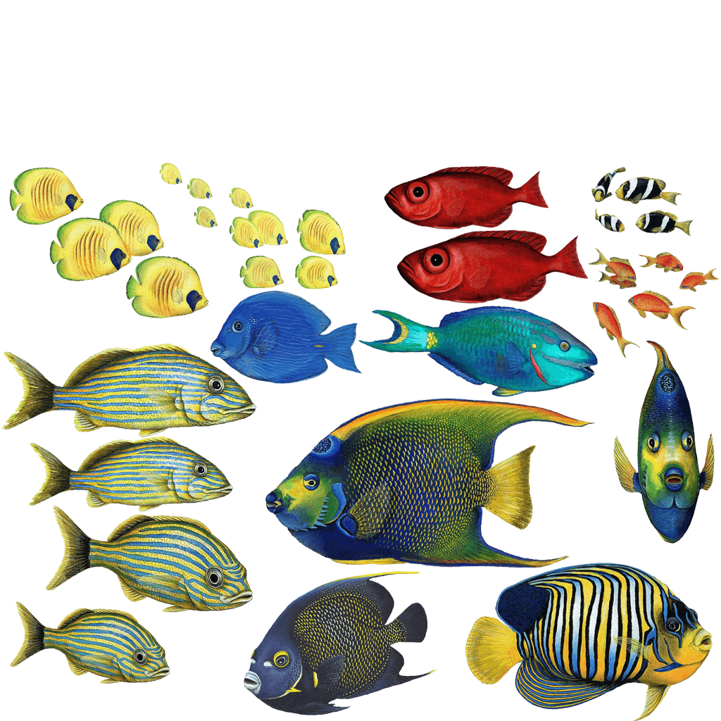 Tropical fish wall stickers combo pack that measures 3 x for Fishpond products