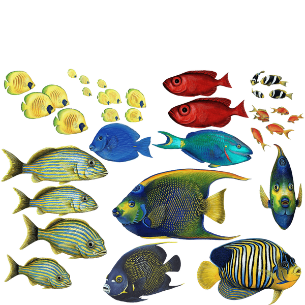 Tropical Fish Combo Pack Wall Decals Stickers