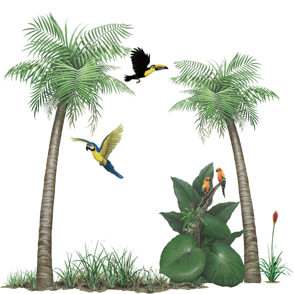 Jungle Themed Wall Stickers Tropical Rainforest Sticker Collection Create Your Own