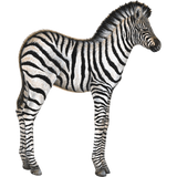 Baby Zebra Animal Wall Decal Sticker