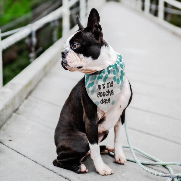It's My Gotcha Day Dog Birthday Bandana Pet Adoption Animal Rescue Scarf New Dog Congratulations Cat Clothing Puppy Accessory Gifts for Dogs Lovers - Teal