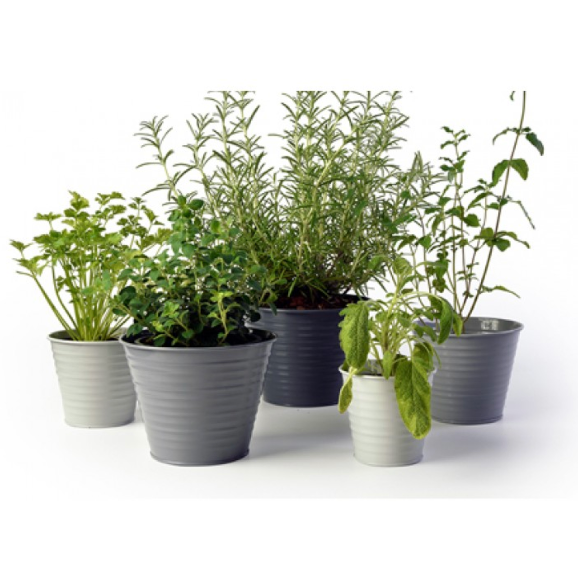 Cool Grey Ombre Pot Set Burton & Ball