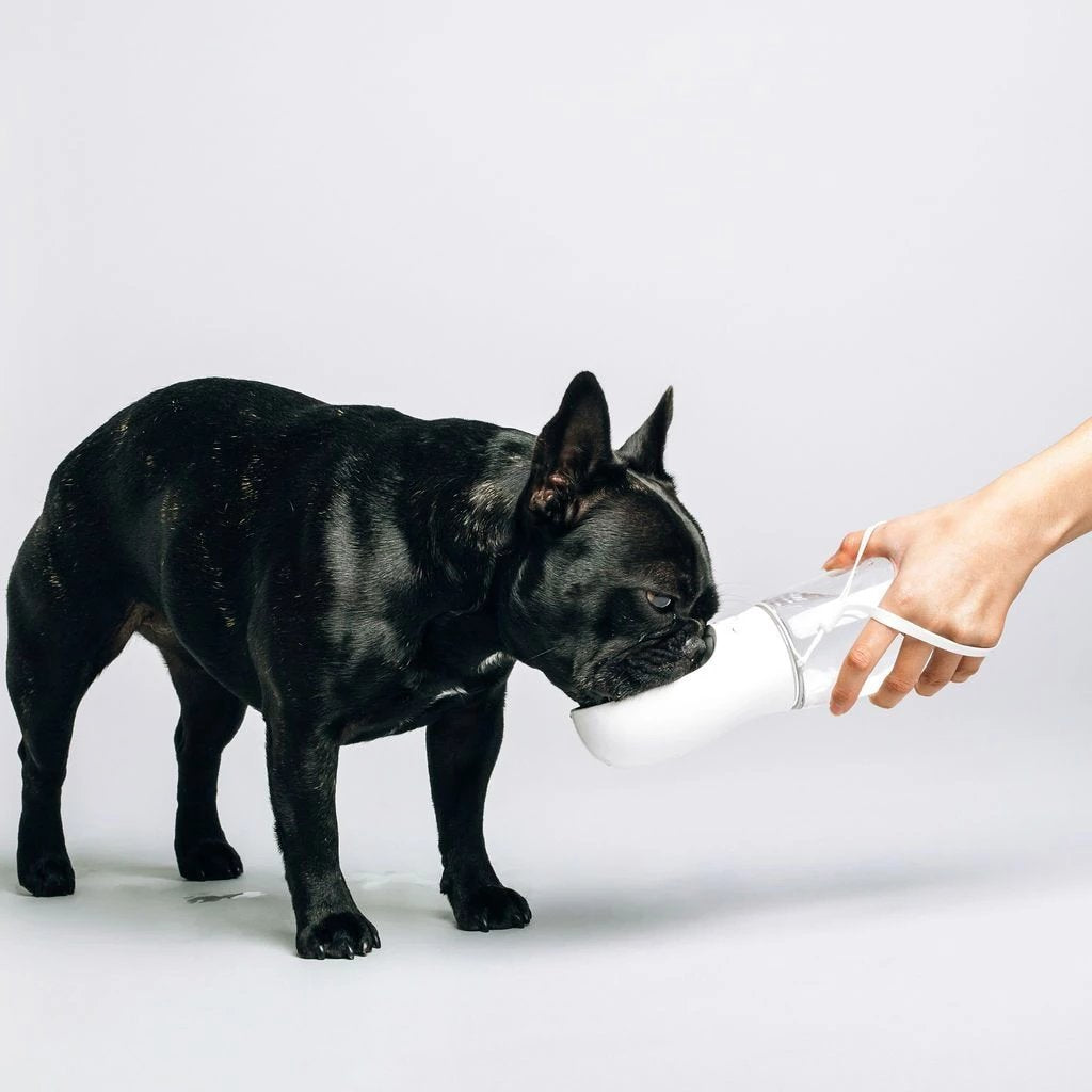 White Thirsty Dog Bottle