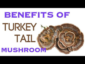 Load and play video in Gallery viewer, Turkey Tail Mushroom