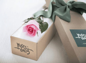 Single Pastel Pink Rose Gift Box - Roses Only