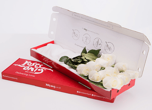 12 White Cream Letterbox Roses - Roses Only