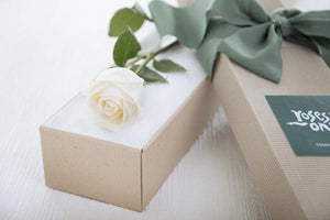 Single White Cream Rose Romantic Gift Box - Subscription - Roses Only