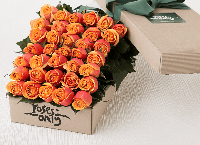36 Cherry Brandy Roses Gift Box - Roses Only