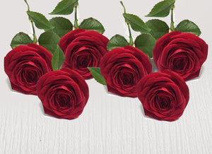 Six extra red stems - Roses Only
