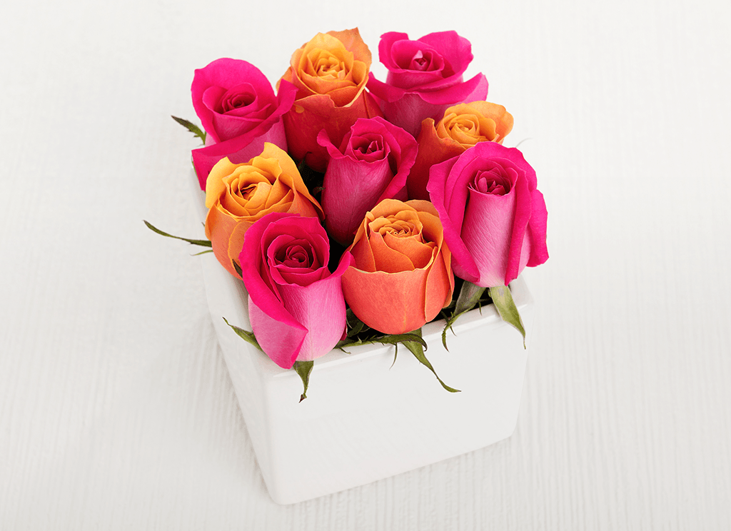 9 Petite Bright Mixed Roses Cube Garden - Roses Only