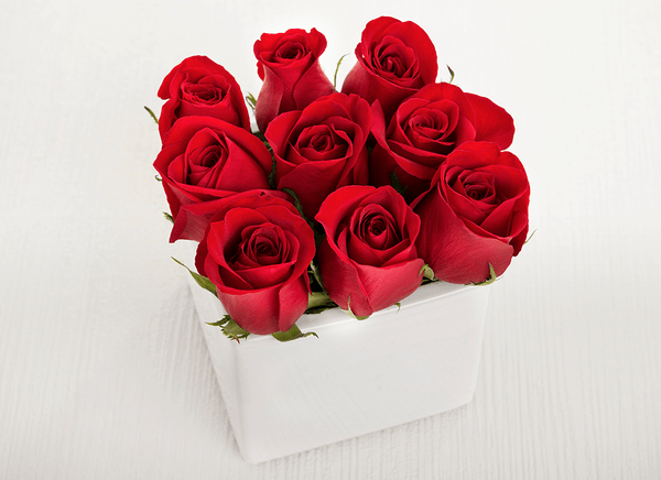 9 Petite Red Rose Cube Garden - Roses Only