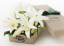 10 White Lilies Gift Box - Roses Only