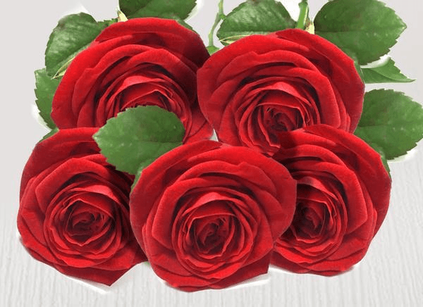 Five extra red stems - Roses Only
