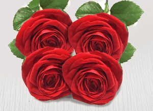 Four extra red stems - Roses Only