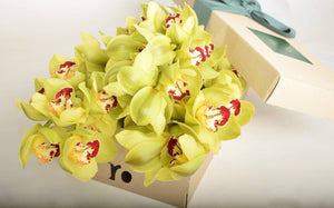 Three Stem Lime Green Cut Cymbidium Orchid - Roses Only