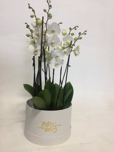 Orchids in Hatbox - Roses Only
