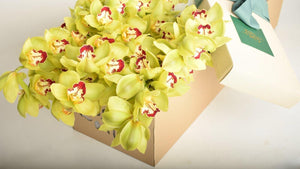 Six Stem Lime Green Cut Cymbidium Orchid - Roses Only
