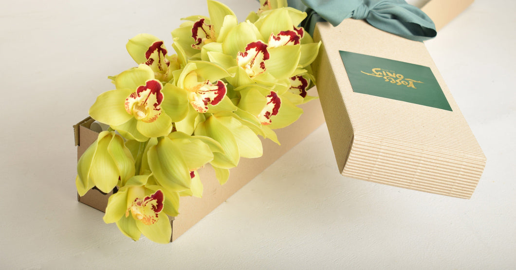 Single Stem Lime Green Cut Cymbidium Orchid - Roses Only