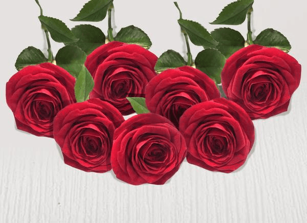 Seven extra red stems - Roses Only