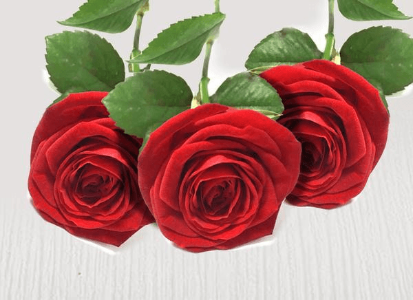 Three extra red stems - Roses Only