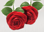 Two extra red stems - Roses Only