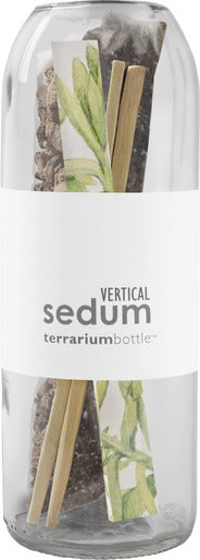 Potting Shed Creations - Terrarium Bottle Vertical Sedum