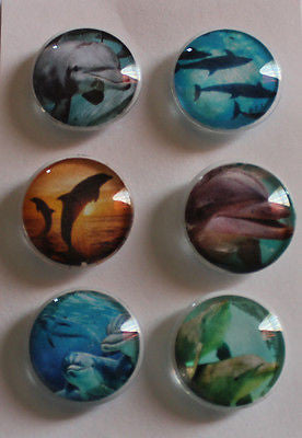 Playful Dolphins Glass Gem Magnets