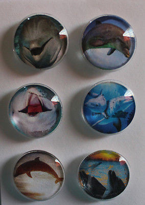 Dolphins Glass Gem Magnets