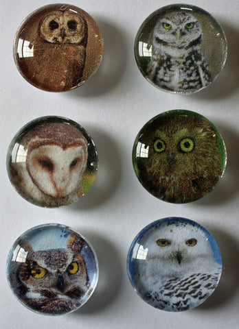 Nature Owl Refrigerator Glass Gem Super Strong Magnets
