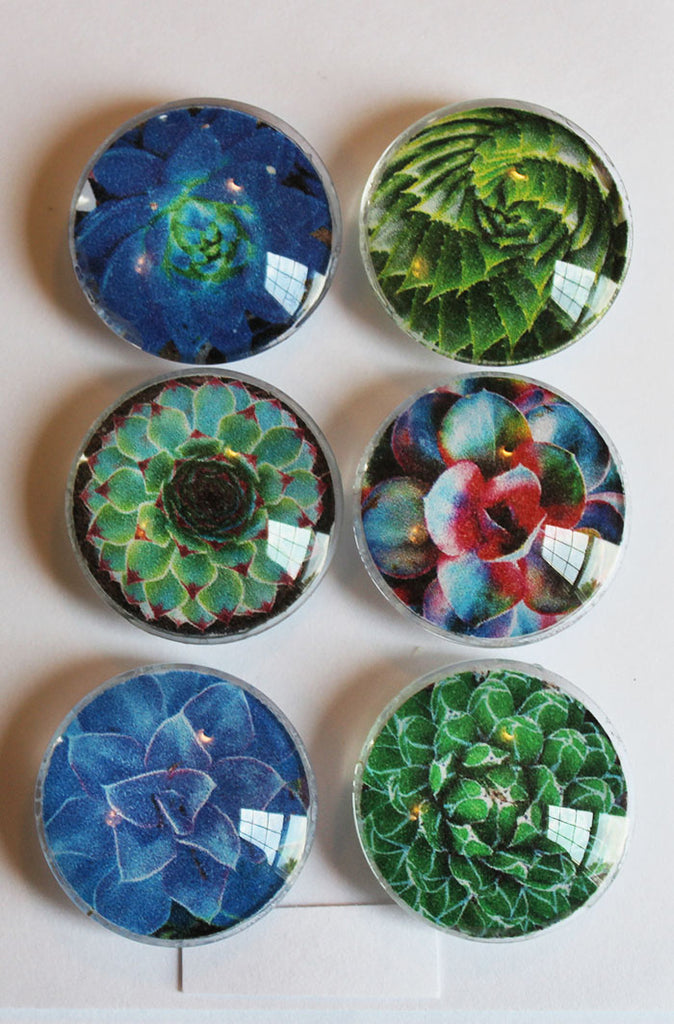 Bright Succulents Glass Gem Super Strong Magnets