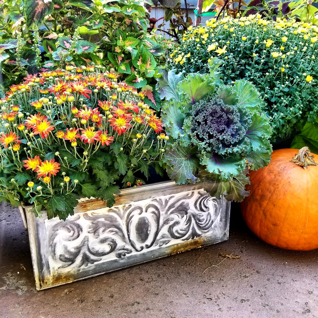 Container Gardening Ideas for the Fall