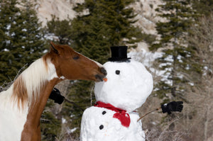 Your Horsey Christmas wish-list sorted!