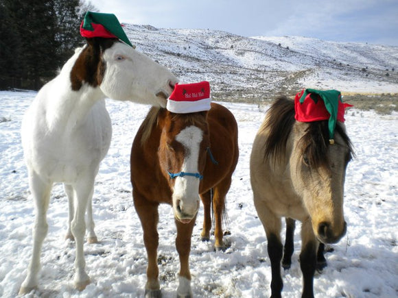 I don't want a lot for Christmas... although Equi Craft Ltd meets all your festive Xmas gifting needs!