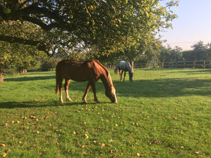 Cool horsey grooming products for autumn