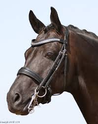 SD Show Master Double Bridle  R527