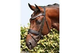 SD  Showmaster Snaffle Bridle  R524