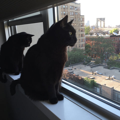 Frank and Henry in Brooklyn