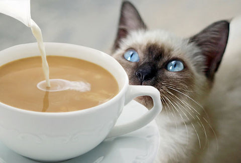 Cat, cream and coffee