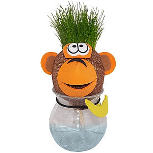 Grow Your Own Monkey Grass Head
