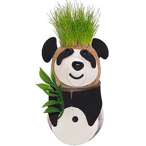 Grow Your Own Panda Grass Head