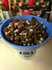 222 fire morels weigh in (after some evaporation occurring during transit) at just under 3 pounds.