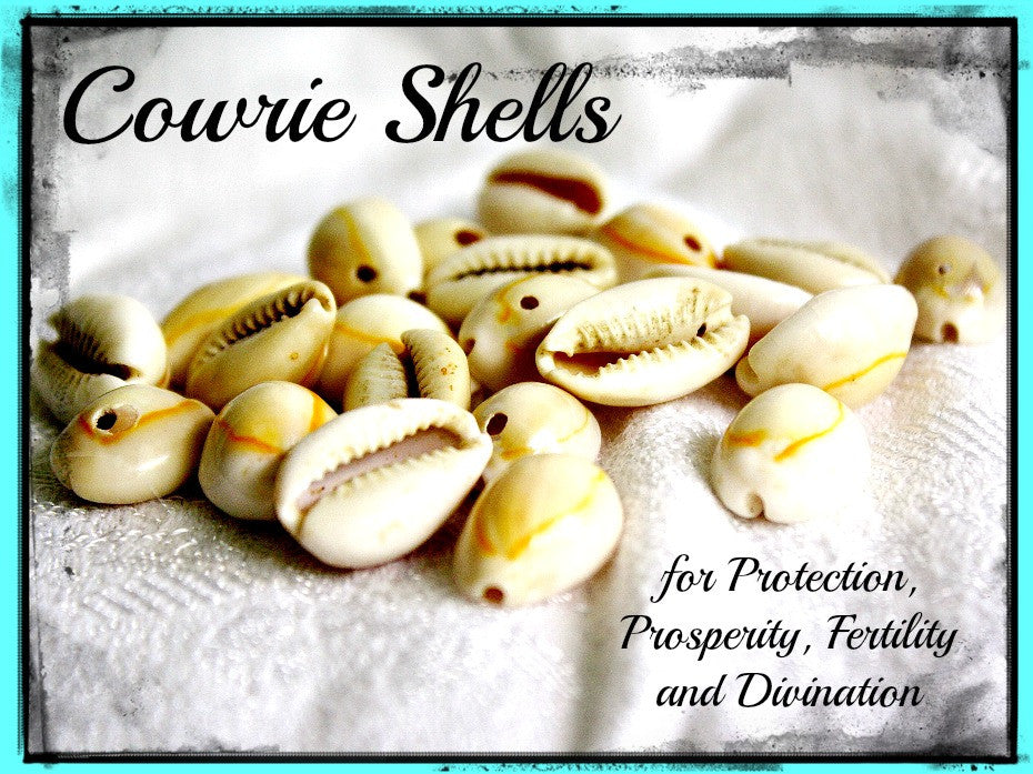 The Magic Of Cowrie Shells