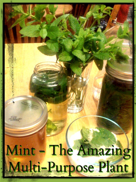 Mint - The amazing Multi-purpose Plant