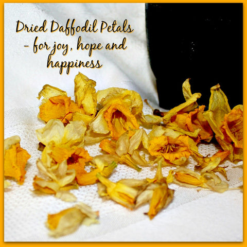 Dried Daffodil Petals - Heather's Mystical Haven - 1