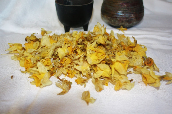 Dried Daffodil Petals - Heather's Mystical Haven - 3
