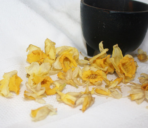 Dried Daffodil Petals - Heather's Mystical Haven - 5