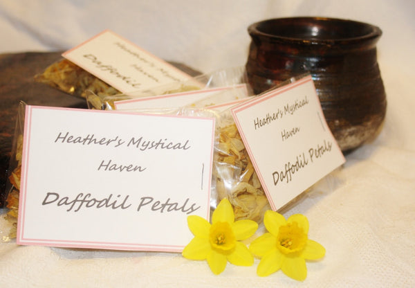 Dried Daffodil Petals - Heather's Mystical Haven - 2