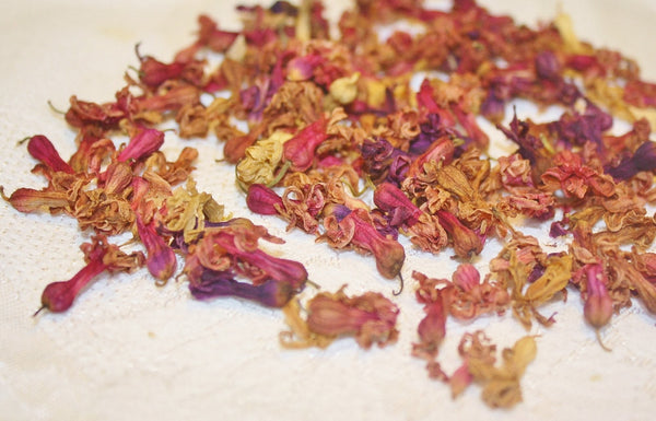 Dried Hyacinth Petals - Heather's Mystical Haven - 4