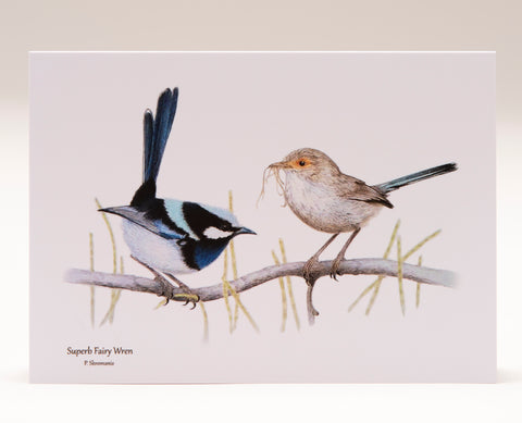 Greeting Card - Superb Fairy Wren Pair